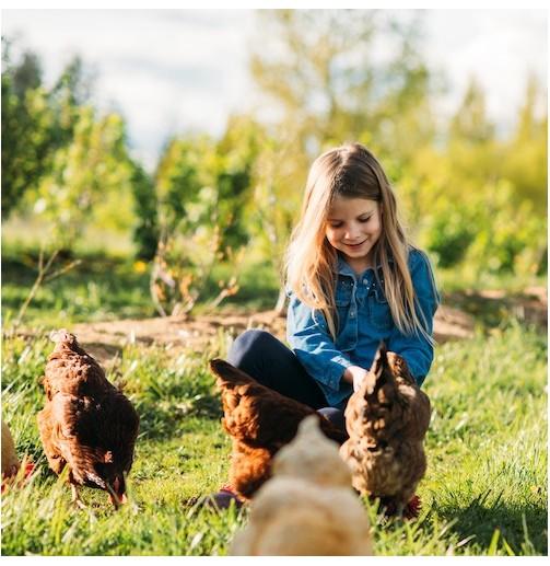 Un día en la granja y paseo...
