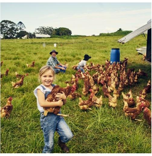 Visita a la granja...