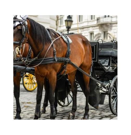 Carruaje de caballos...